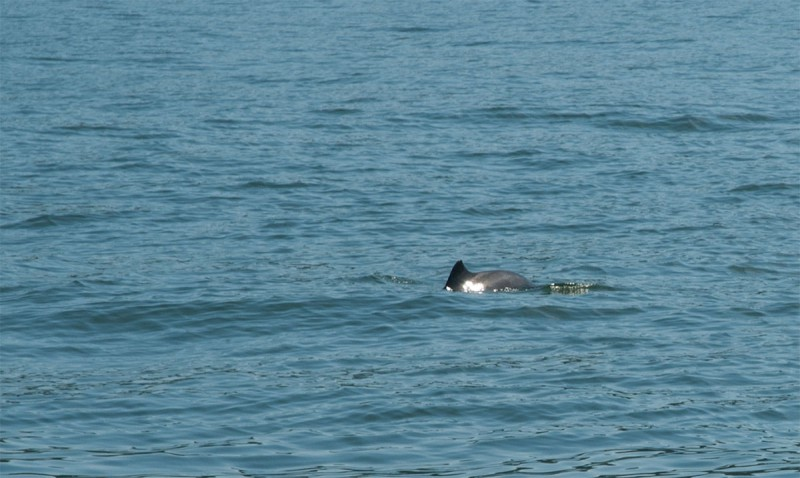 dolphin-7824